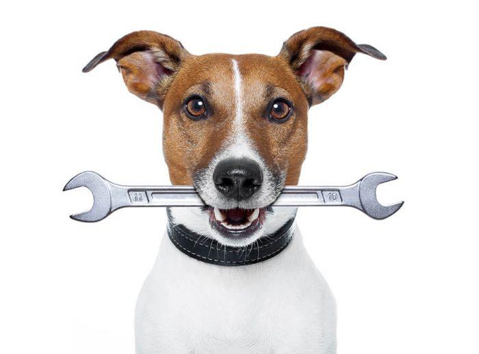 Salty Dog Web Design - Support & Maintenance